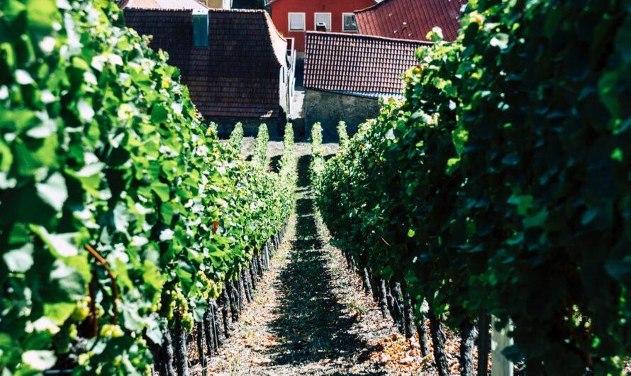 Vino de pitarra:opiniones,precios, compra, selección, variedades…